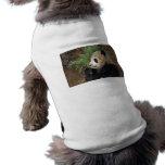 Perfil de la panda ropa de mascota