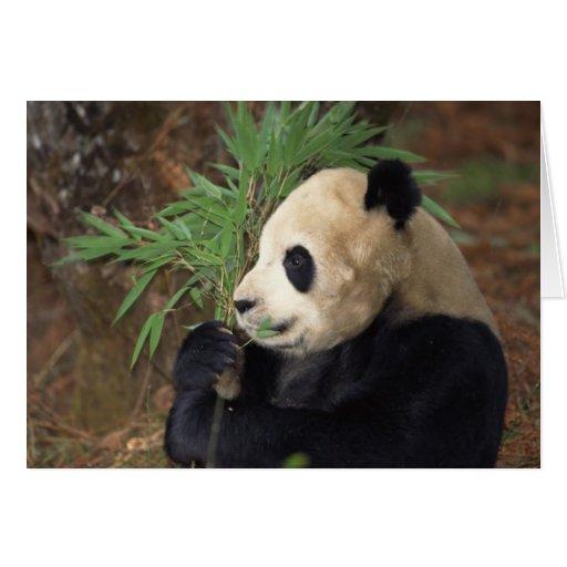 Perfil de la panda tarjeton
