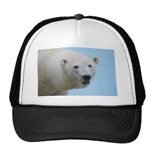 Perfil de los osos polares gorro de camionero