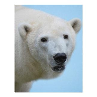 Perfil de los osos polares plantillas de membrete
