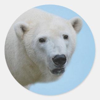 Perfil de los osos polares pegatina redonda