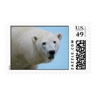 Perfil de los osos polares sellos
