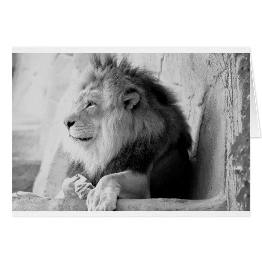 Perfil de reclinación del león tarjeta