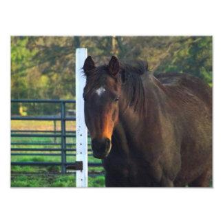 Perfil del caballo de OTTB Fotografía