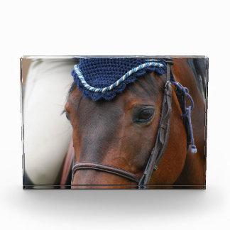 Perfil del caballo