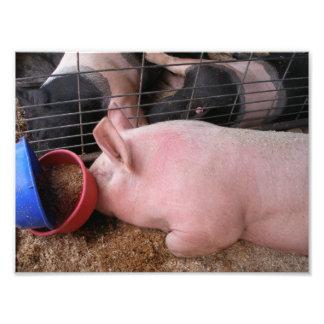 Perfil del cerdo rosado que coloca por los cuencos fotografia