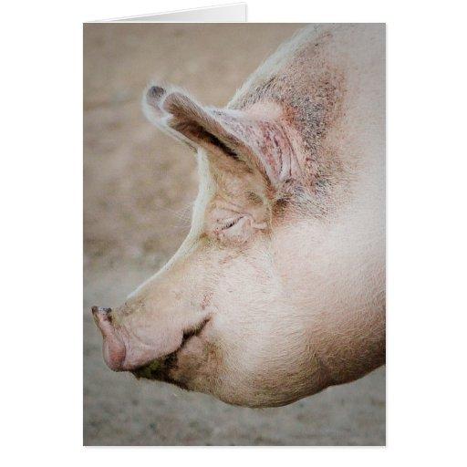 Perfil del cerdo tarjeton