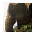 Perfil del elefante azulejos ceramicos