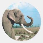 Perfil del elefante pegatina redonda