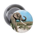 Perfil del elefante pin