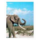 Perfil del elefante postal