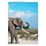 Perfil del elefante tarjeta