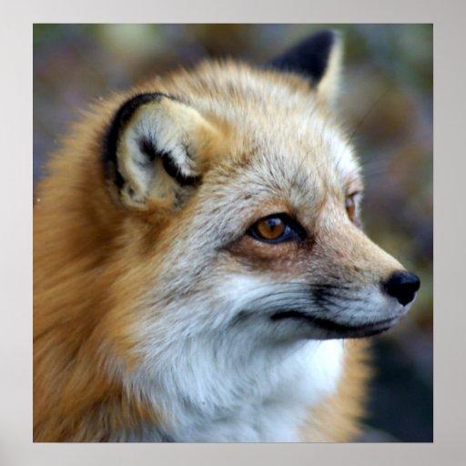 Perfil del Fox Impresiones