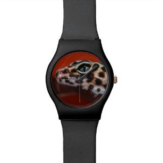 Perfil del Gecko del cabo (capensis de Reloj