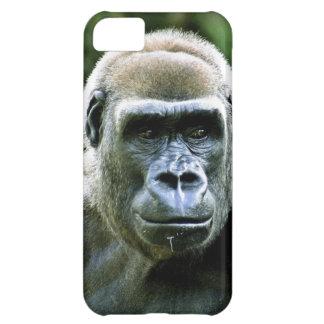 Perfil del gorila
