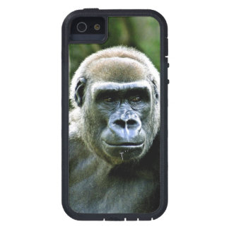 Perfil del gorila iPhone 5 protectores
