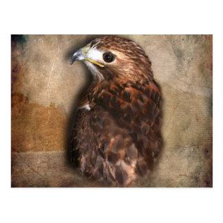 Perfil del halcón de peregrino tarjetas postales