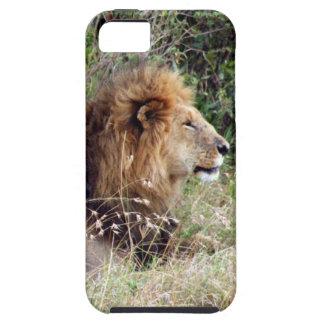 perfil del león iPhone 5 fundas