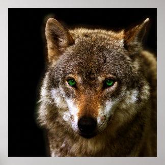 Perfil del lobo con el fondo editable del ~ de los póster