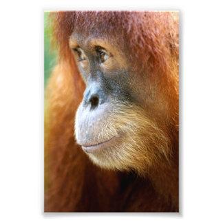Perfil del orangután fotografia