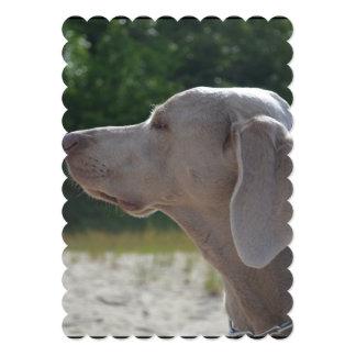 """Perfil dulce del perro de Weimaraner Invitación 5"""" X 7"""""""
