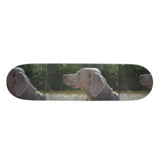 Perfil dulce del perro de Weimaraner Patín