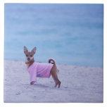 Perfil lateral de un perro que se coloca en la pla azulejo cuadrado grande