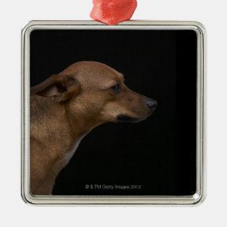 Perfil mezclado del perro de la raza en fondo negr adornos