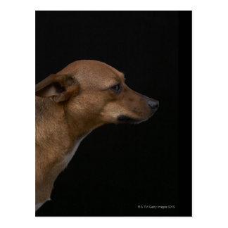 Perfil mezclado del perro de la raza en fondo postal