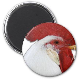 Perfil principal del gallo imán redondo 5 cm