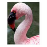Perfil rosado postal