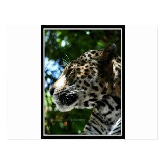 Perfilado del guepardo postales