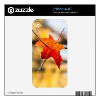 perforado en otoño iPhone 4 calcomanías