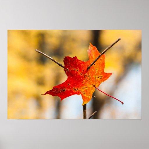 perforado en otoño posters