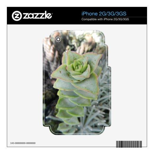 Perforata del Crassula iPhone 3G Skins