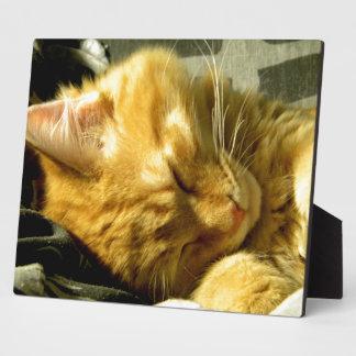 Perfore el Snuggle Placas Con Fotos