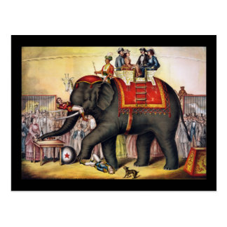 Performing elephant postcard
