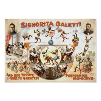 Performing Monkeys Vintage Poster