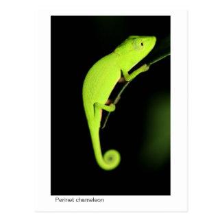 Perinet Chameleon Postcard