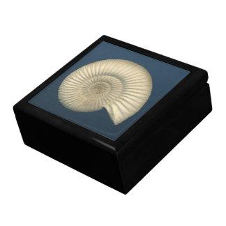 Perisphinctes Ammonite fossil Jewelry Boxes