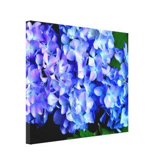 Periwinkle  Hydrangeas Canvas Print