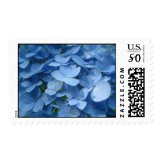 Periwinkle Hydrangea's Postage