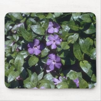 Periwinkle, (Vinca Minor) flowers Mousepad