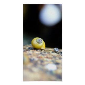 Periwinkles Poster