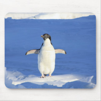Perky Little Penguin Mouse Pads