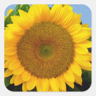 Perky Sunflower Square Sticker