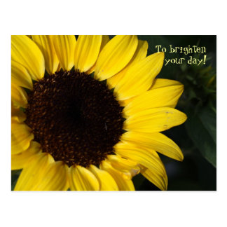 Perky Sunflower Thinking of You Post Card