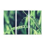 Perla de agua en Wellness verde hierba Impresiones En Lienzo Estiradas