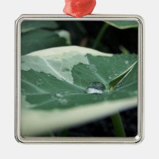 Perla del agua dulce adorno cuadrado plateado