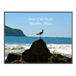 Perla del Pacífico, tarjeta de la gaviota de Mazat Postales